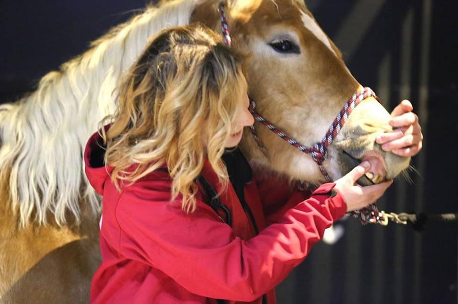 Dehidracija kod konja-prevencija