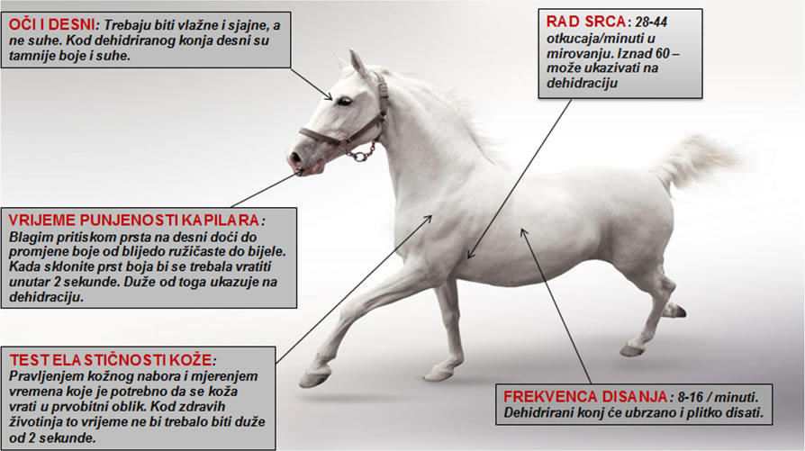 Dehidracija kod konja-simptomi