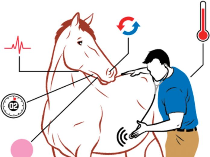 Vitalni znaci kod konja