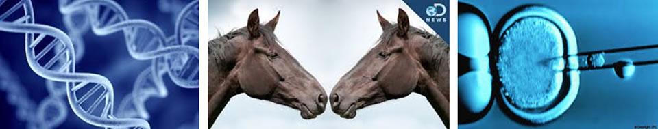 Kloniranje konja-
