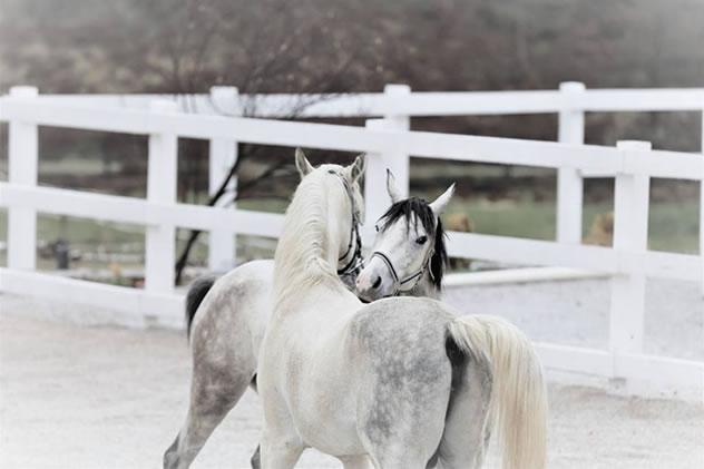 Monarh i Athena Ranc za konje Lazy Horse, Sarajevo