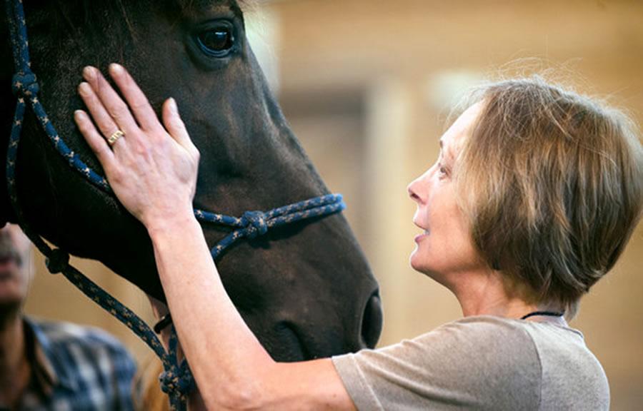 Učenje potpomognuto konjima ili integrativno učenje sa konjima