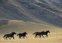 Boja konjske dlake kroz vijekove