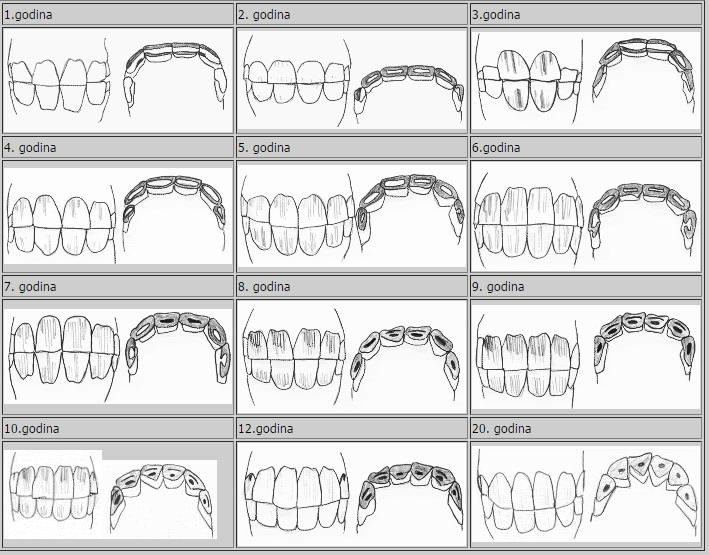 zubi konja po godinama
