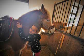 koliko kosta vlastiti konj
