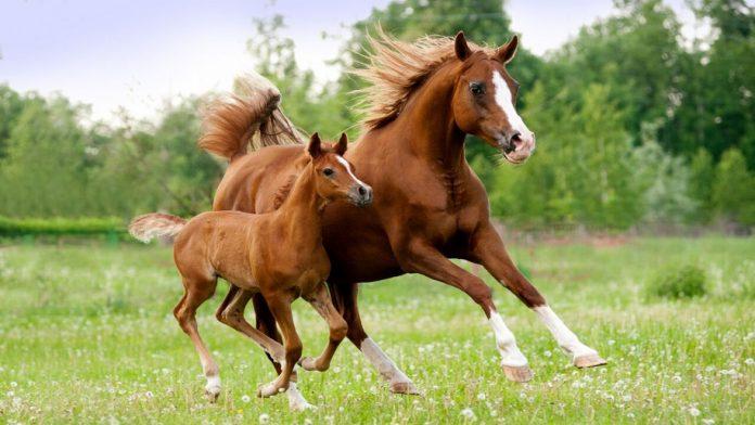 Skeletni sistem konja 1