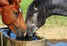 Priprema konja za ljetne vrucine