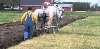 konji rade u polju